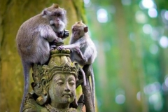 Tour to Sangeh Monkey Forest - Best offer Edy Ubud Tour