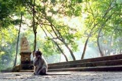 The Sacred Ubud Monkey Forest Sanctuary