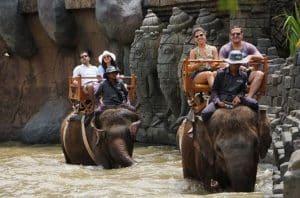 Bali zoo-Open Hutan Sumatera- Bali zoo tour package