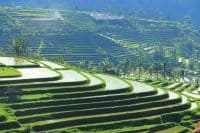 Jatiluwih rice terrace-explore the real bali