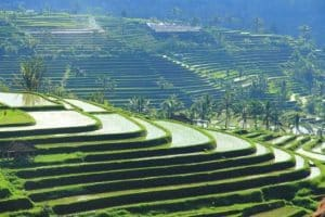 Jatiluwih rice terrace-explore the real bali