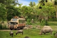 Package combination-Bali Safari tour-Edy Ubud Tour Special Offer- Grab your ticket now
