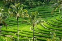 Pupuan rice terrace - most beautiful rice terrace - bali tour package - edy ubud tour