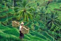 Tegallalang rice terrace-bali tour package-edy ubud tour