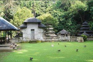 bali alas kedaton; bali forest; walk into the forest; tour to Bali; edy ubud tour;