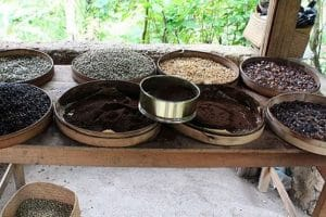 bali coffee agrotourism-luwak coffee bali original-coffee maker