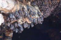 bat cave temple n bali-edy ubud tour- best deal bali tour -speaking english tour driver