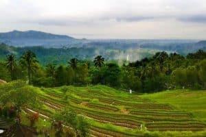 bukit jambul terrace paddy -bali tour package
