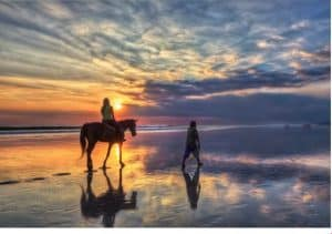 horse riding at Canggu-special price to book online today