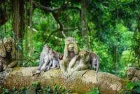 ubud monkey forest-best deal with edy ubud tour